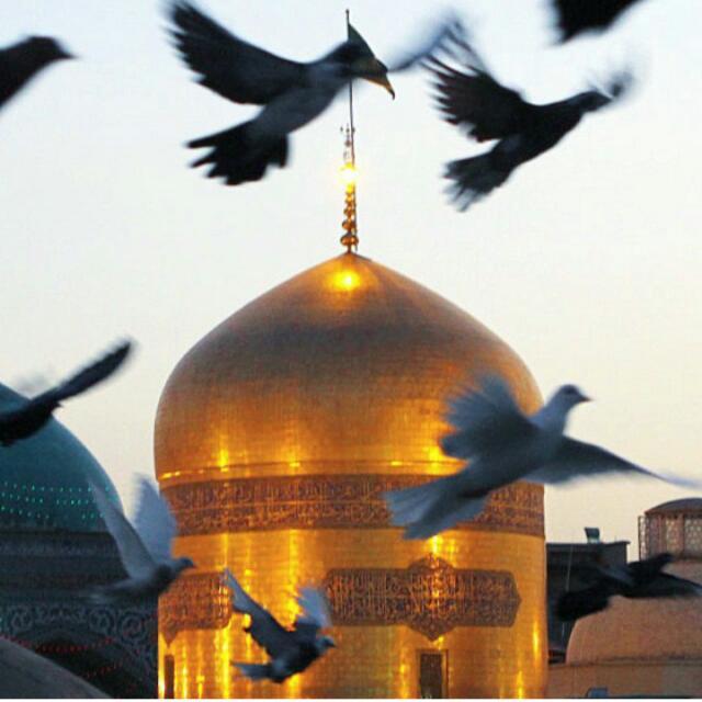 دانلود نوحه حاج محمد رضا طاهری به نام اومدم به پا بوسی مشهد